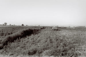 bl000502-Romani-Workers-harvesting-tomatoes