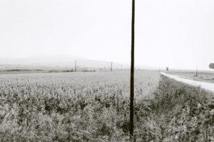 bl000503-Cornfields-Plain-of-Strimon