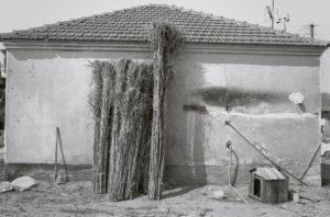 bl000506-Reeds-behind-a-house