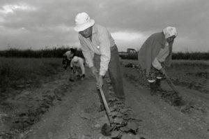 bl000571-Field-workers-at-dawn-Ioanna-Keramida-Nikolaos-Keramidias-and-Vangelitsa-Keramida